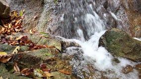 Flödande vaggar köra för vattenström över och mossa in i en bäck av vattenfallet i den tropiska skogen stock video