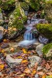 Flödande vatten i hösten Arkivbild