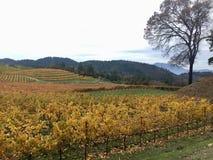 Flödande vingårdar Arkivbilder