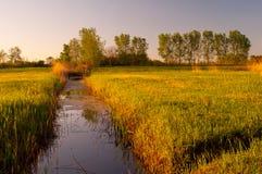 flödar flodswampen Arkivbilder