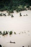 Flöde av liv i floden Arkivbild