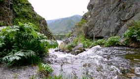Flöden för en bergström i bergen arkivfilmer
