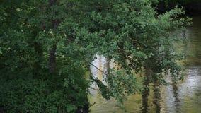 Flödet av floden med reflexionen av träden och solen att glo lager videofilmer