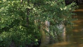 Flödet av floden med reflexionen av träden och solen att glo stock video
