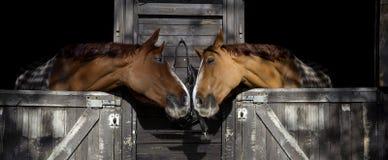 Förälskade hästar arkivbild