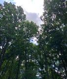 Flüchtig blicken durch Bäume Stockfotografie