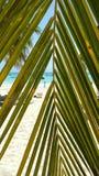 Flüchtiger Blick am Strand stockbilder