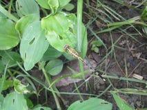 Flügel der Libelle stockbild