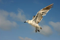Flügel des Fluges Lizenzfreies Stockfoto