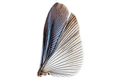 Flügel des Insekts lokalisiert auf einem Weiß Stockfoto