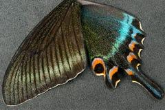 Flügel des Schmetterlinges Stockfoto