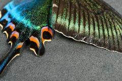 Flügel des Schmetterlinges Stockfotos