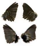 Flügel des Spatzen Stockbild