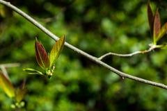 Flügel-förmige Blätter Stockbild