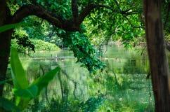 Flüsse und Bäume Lizenzfreie Stockfotografie
