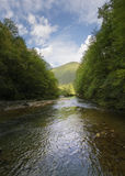 Flüssige Abflussrinne des Flusses der Wald Lizenzfreie Stockbilder