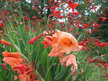 Flüssige Blumen Stockfotografie
