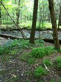 Flüssiger Fluss Stockbild