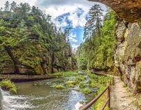 Flüssiger Fluss durch grünen Wald stockfotografie