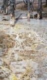 Flüssiger gelber Schlamm mit bloßen Baumstämmen Lizenzfreies Stockbild