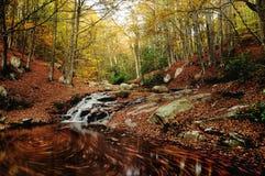 Flüssiger Herbst Montseny-Dampf stockfotos
