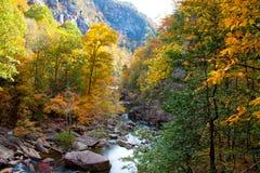Flüssiger Nebenfluss mit Herbstlaub Stockbild