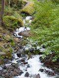 Flüssiger Waldstrom und -wasserfall Stockfoto