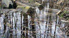 Flüssiges Wasser des Gebirgsflusses gegen Steine Quellwasser, ruhiger Wasserstrom, Wasserkräuselungen, greller Glanz auf dem Flus stock video