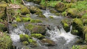 Flüssiges Wasser eines natürlichen Nebenflusses stock video
