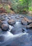 Flüssiges Wasser. Fluss im Wald Lizenzfreies Stockbild