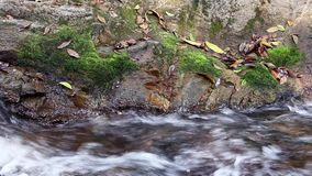 Flüssiges Wasser strömt Betrieb mit moosigen übermäßigfelsen im Wald stock video footage