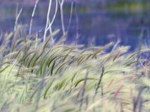 Flüstern des Grases im Wind stockfotografie