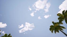 Fl?che landet ?ber den Ozean niedrig fliegen In den Vordergrundbaumpalmen nahe Wasser stock footage