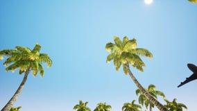 Fl?che landet ?ber den Ozean niedrig fliegen In den Vordergrundbaumpalmen nahe Wasser stock abbildung