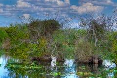 FL-Everglades National Park-Anhinga Trail Royalty Free Stock Photos