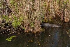 FL-Everglades National Park-Anhinga Trail Stock Photos