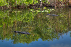 FL-Everglades National Park Royalty Free Stock Photos