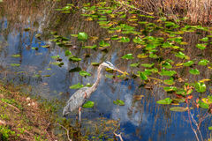 FL-Everglades National Park-Anhinga Trail Royalty Free Stock Photography