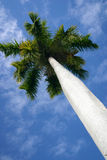 FL Palm Tree stock photography