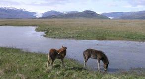 Flaajokull Royalty-vrije Stock Fotografie