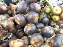 Flabellifer de Borassus ou tal Photo stock