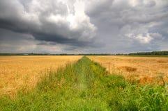Flache Felder der Gerste mit einem langen, geraden Abzugsgraben Lizenzfreies Stockbild