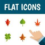Flache Ikonen-Blätter eingestellt von der Erle, vom Hickory, von Leafage und von anderen Vektor-Gegenständen Schließt auch Wedel, Stockbilder
