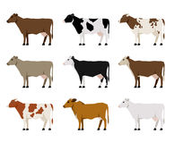 Flache Ikonen der Milch-Kühe Das meiste populäre Vieh lizenzfreie stockfotografie