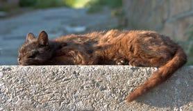 Flache Katze der Lage stockbild