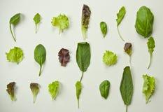 Flache Lage der grünen Blätter Stockbilder