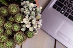 Flache Lage des Kaktus und der Laptop-Computers Lizenzfreies Stockfoto