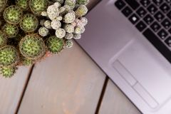 Flache Lage des Kaktus und der Laptop-Computers Lizenzfreie Stockfotos