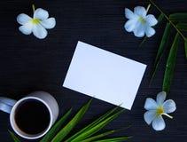 Flache Lage des Sommers mit grünem Blatt und Frangipani blühen Lizenzfreie Stockbilder