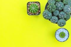 Flache Lage von Kaktuspflanzen auf gelbem Hintergrund Stockbild